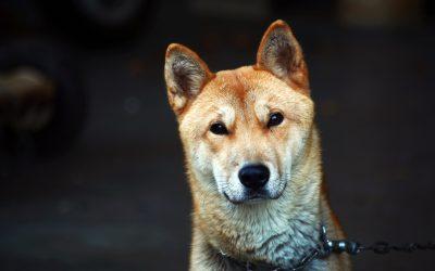 Est-ce que mon chien est en santé ?